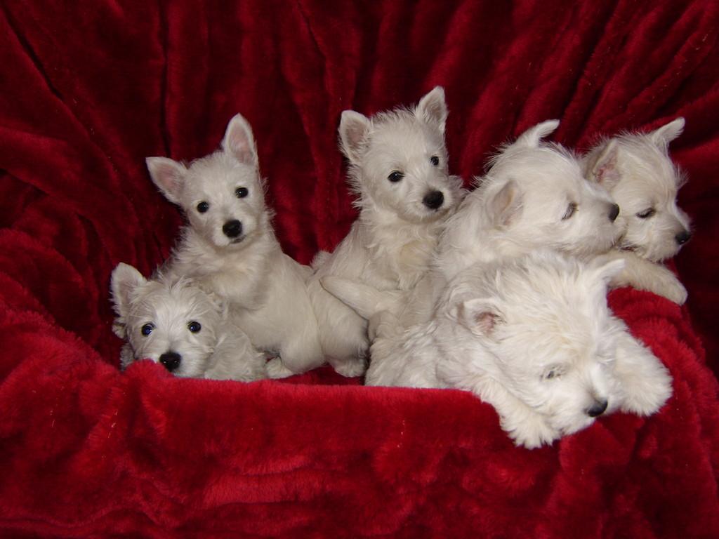 Kalle mit seinen Geschwistern : Käpt. Max, King Emil, Kim, Korrie Lee und Knuddel Lena