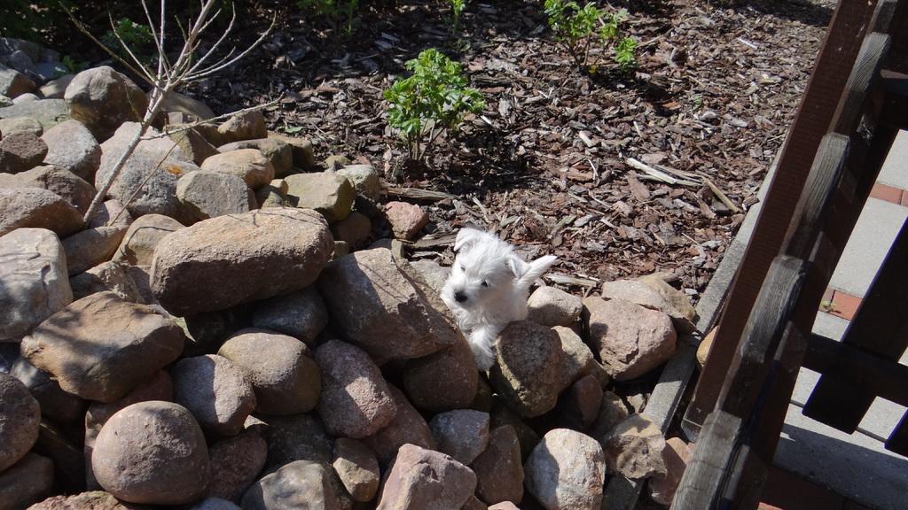 Einen Steinhaufen kann ich auch erklimmen !! Naja, fast :-))