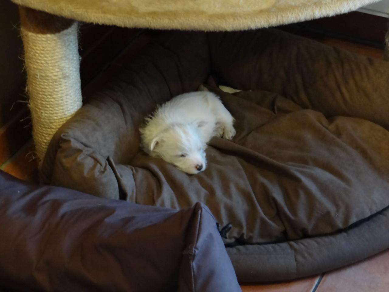 Habe einen neuen Schlafplatz gefunden :-))