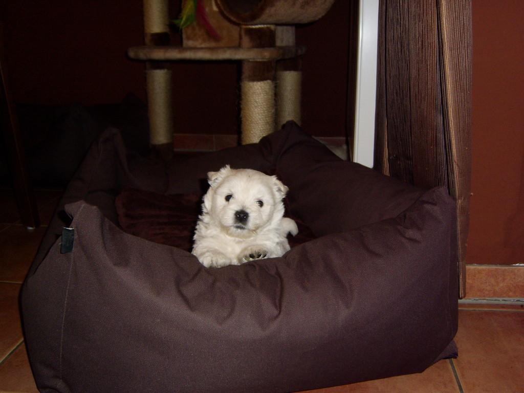 Kleiner Hund und grooßer Korb