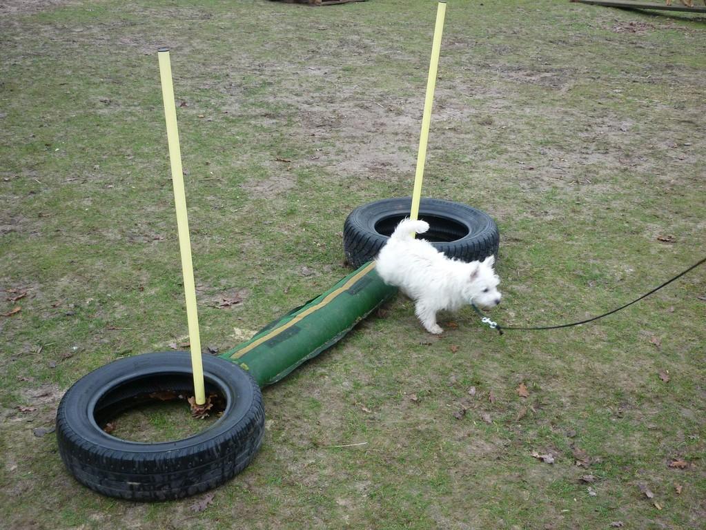 Und dann muß man auch noch zur Hundeschule :-)),macht aber tierischen Spaß !!