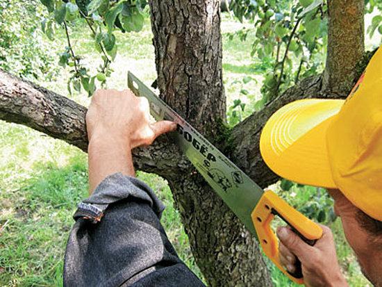 обрезка плодовых деревьев в Московской области