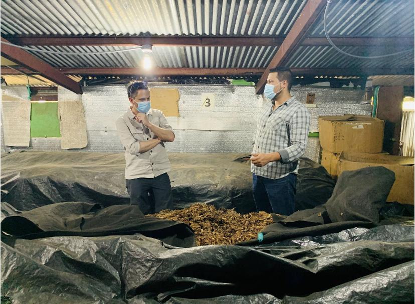 Anschließend werden sie drei Monate fermentiert: In meterhohen Stapeln erwärmt sich der Tabak und entwickelt so sein besonderes Aroma.