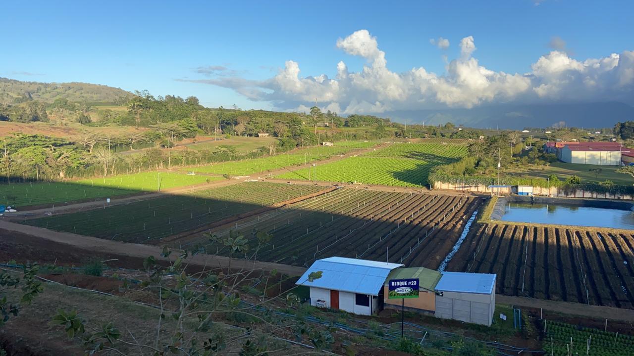 A la découverte de Luis Angulo et de sa dynamique entreprise agricole