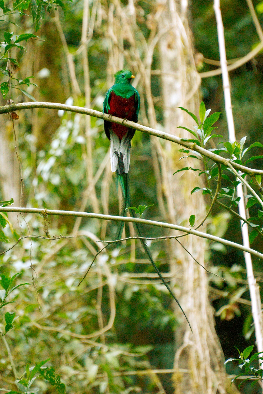 Greentique Costa Rica Tours