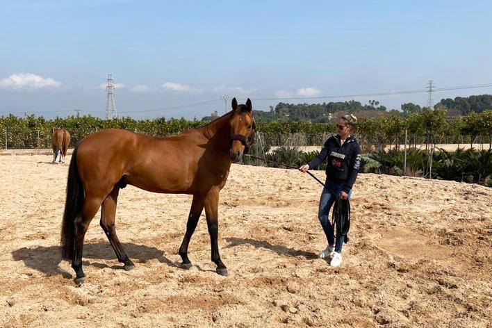 """Micky Morssinkhof: """"Als alles meezit woensdag gezonde paarden naar huis"""""""