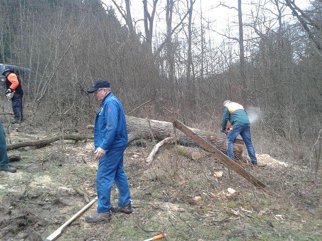 April 2018 Aus dem Stamm der umgestürzten Eiche soll eine Sitzbank an der Hütte entstehen