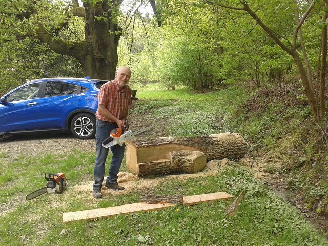 Sägearbeiten nahe der Häuserdickhütte; die geplante Sitzbank aus dem Stamm der Windwurfeiche nimmt Konturen an April 2018
