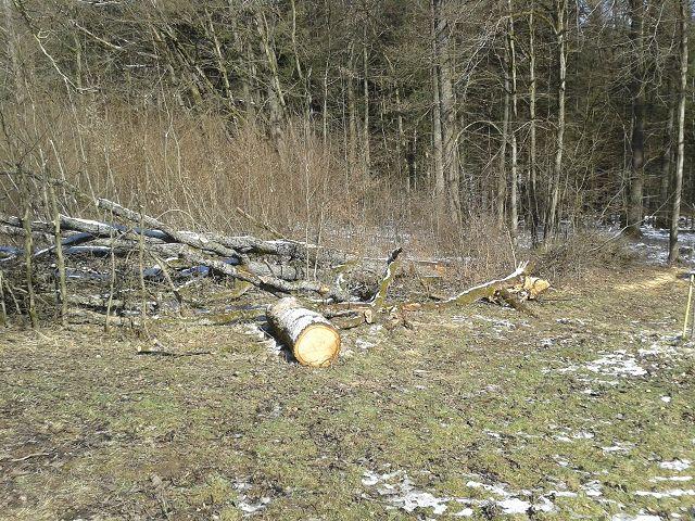 März 2018 Arbeitseinsatz - Aufarbeitung der durch Windwurf umgestürzten Eiche an der Häuserdickhütte