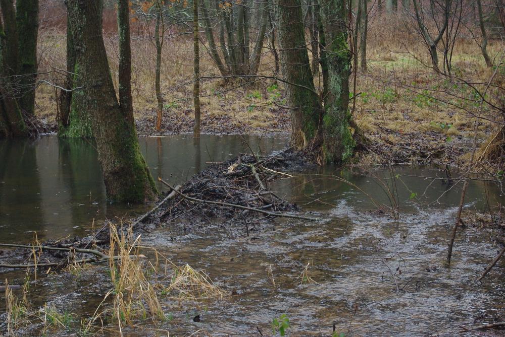 ... und überflutet Gebiet, das normalerweise trocken ist.