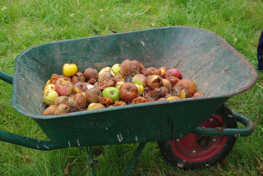 Verfaultes Obst wurde separiert.