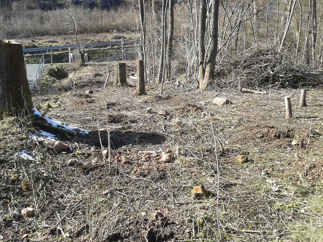 Arbeiten aus Verkehrssicherungspflicht am vereinseigenen Grundstück an der Rolandquelle Januar 2018
