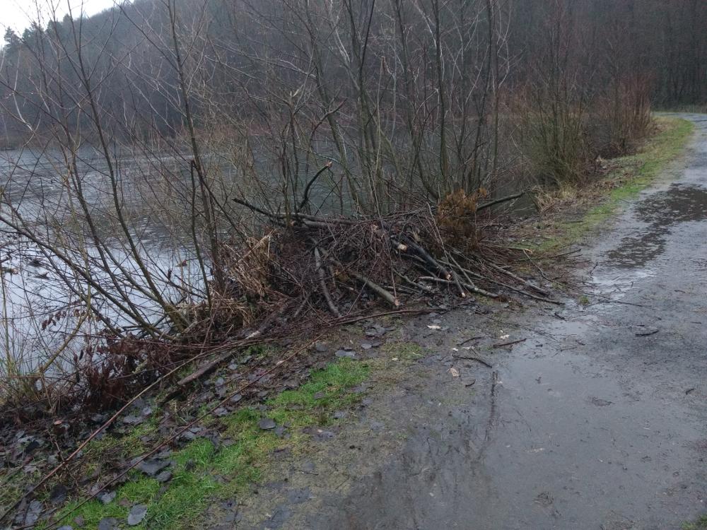Unter dem Weg scheint eine neue Biberburg angelegt zu sein.
