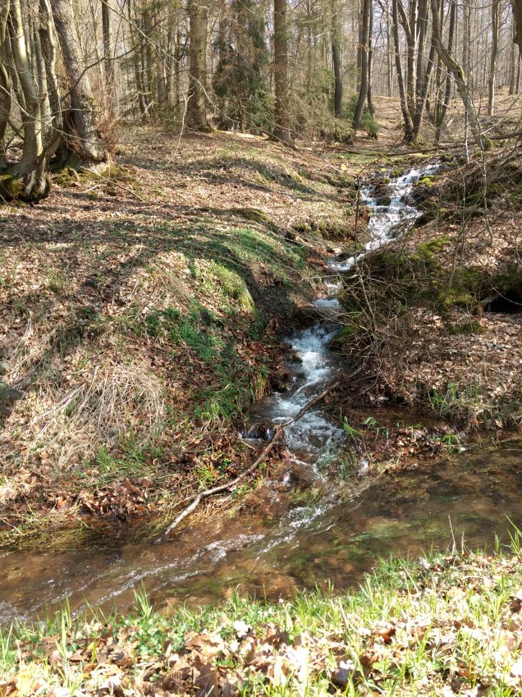 kleiner Zufluss zum Klingbach