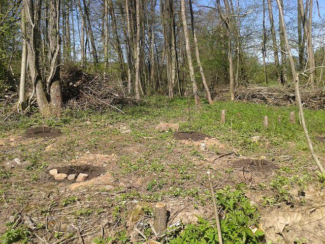 April 2018 weitere Anpflanzungen von Beerensträuchern in der Streuobstwiese an der Gartenhecke