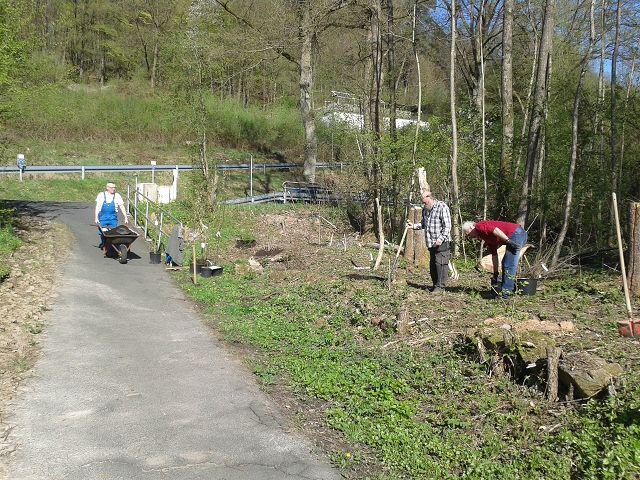 Neuaufbau einer Hecke; Anpflanzungen verschiedener einheimischer Strauchgehölze an der Rolandquelle