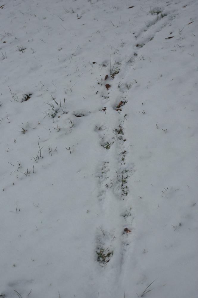 Spuren vom Hund (die Fußspuren sind nebeneinander gesetzt)