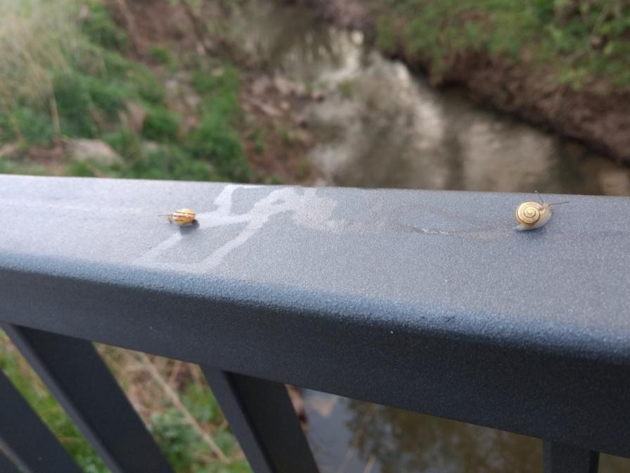 kleine Schnecken auf einem Geländer an der Salz