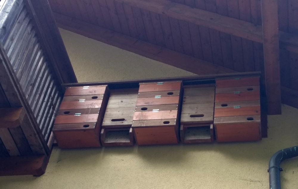 Kästen für Mauersegler und Fledermäuse am Haus