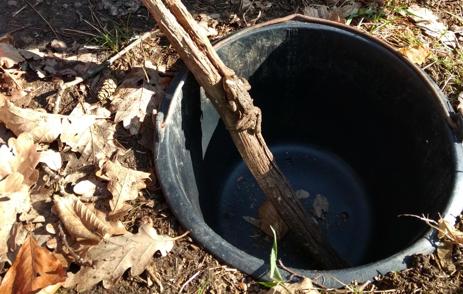 Erdkrötenmännchen am Stock im Eimer