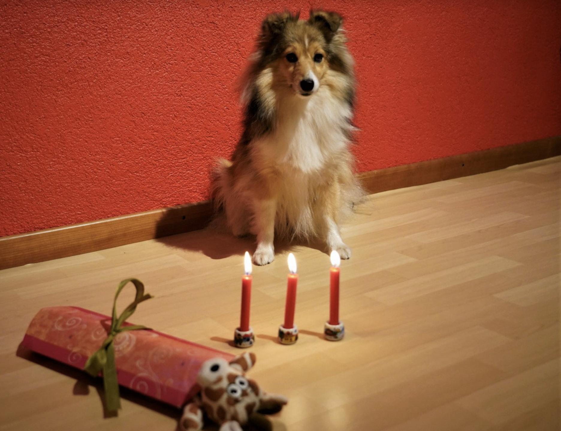 Queeny's 3. Geburtstag