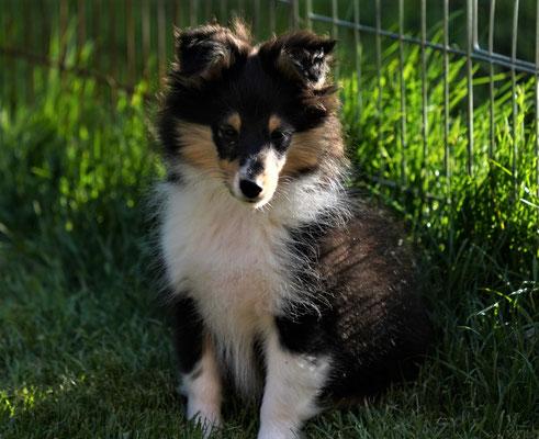 Zoe ist 3 1/2-4 Monate alt