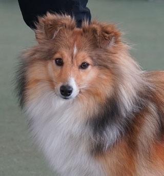 Queeny 1  1/2 - 2 Jahre alt