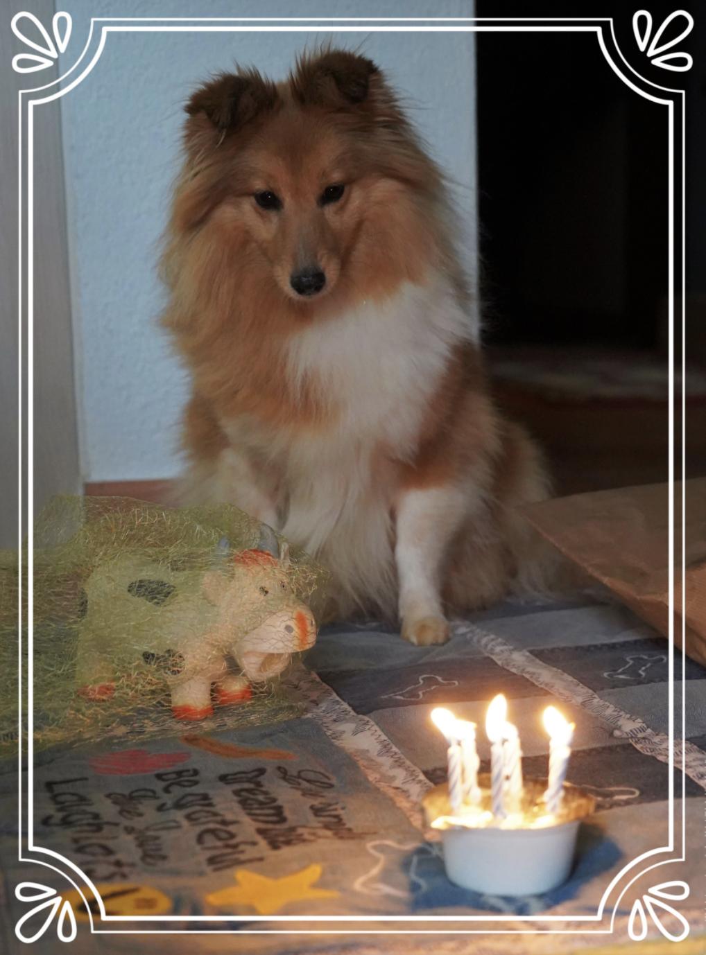 Gracy's 6. Geburtstag