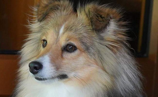 Neue Fotos von Queeny mit 1 1/2 Jahren