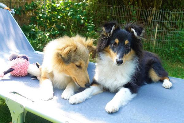 Inzwischen sind Zoe & Cian bereits 5 1/2 Monate alt und schon Junghunde <3