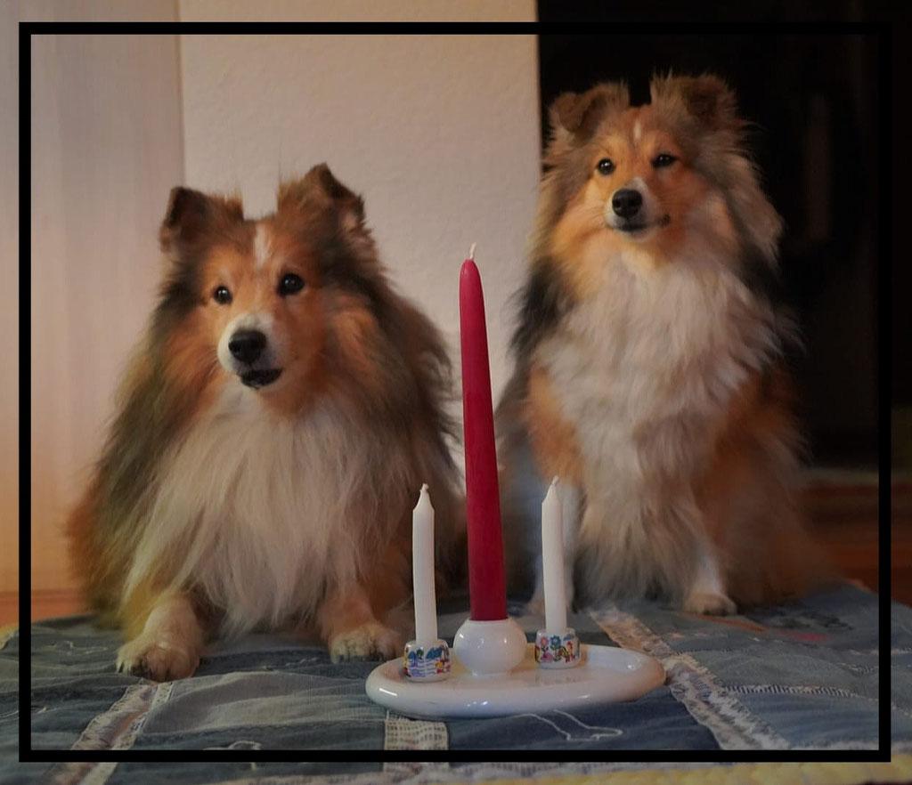 Gino's 12. Geburtstag