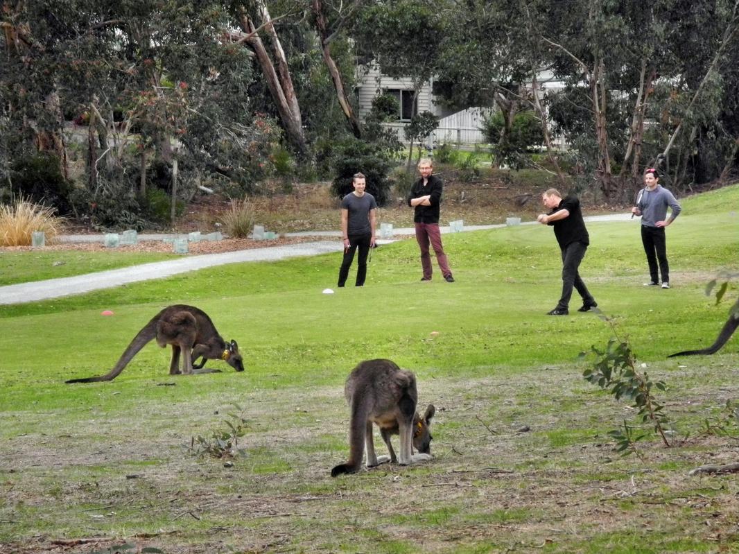 Raenmäher auf australisch