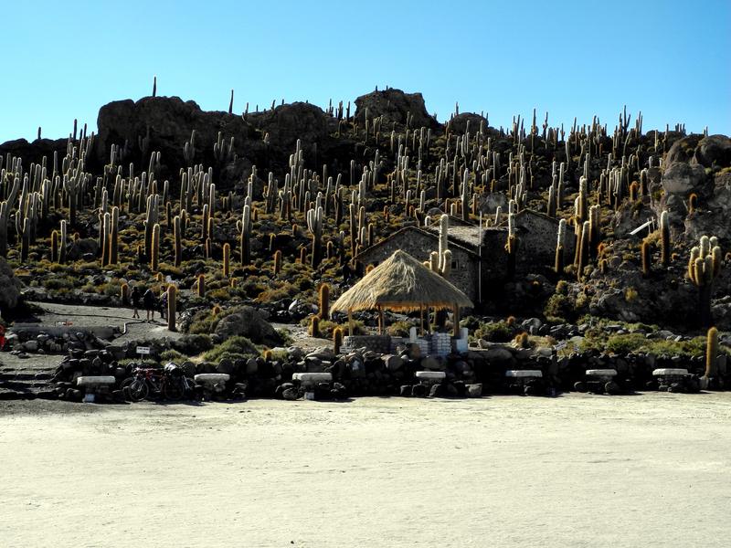 Isla Incahuasi - mitten auf dem Salzsee