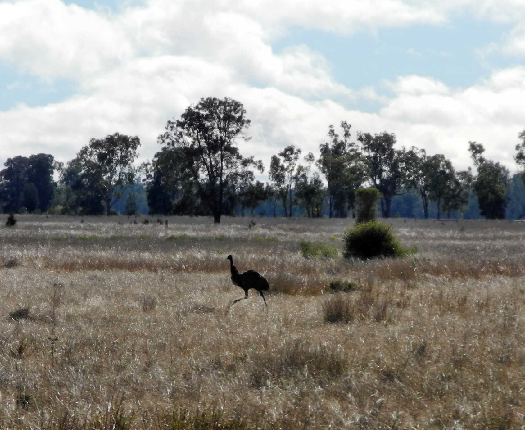 Unser erster Emu