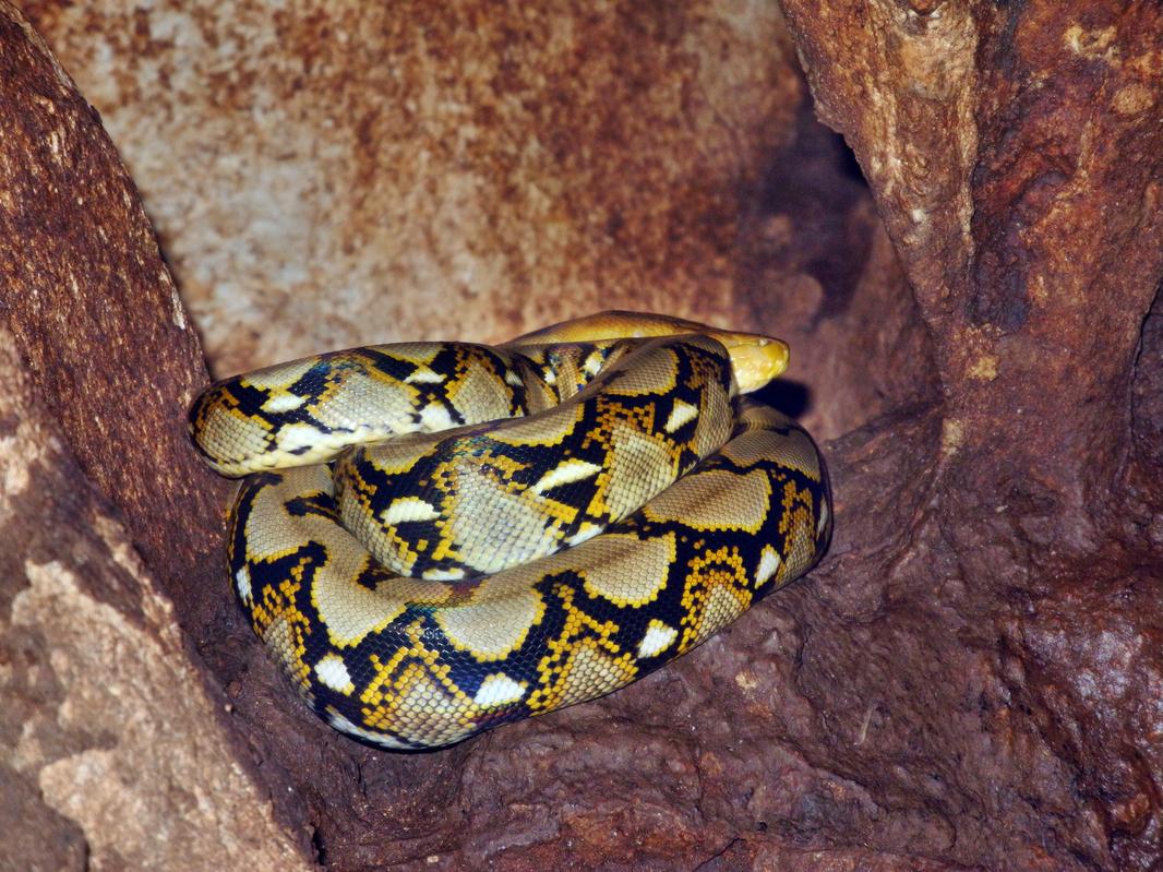 Eine echte Python