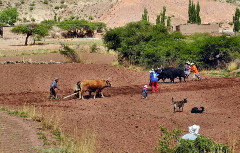 Traktoren sind in Bolivien sehr selten
