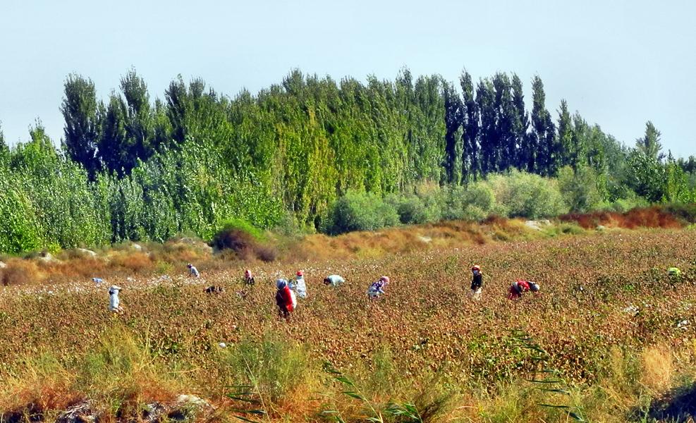 Baumwollernte im Ferghanatal