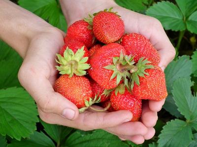 Erdbeeren Hof Moorhörn