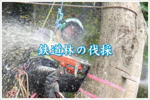ウッドタワー工法による鉄道林の特殊伐採事例ページへ