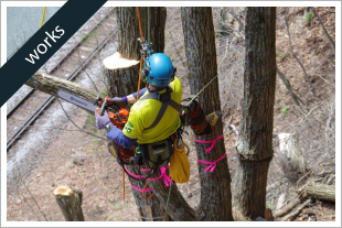 鉄道沿線の近接木をウッドタワー工法で特殊伐採