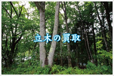 立木の買取