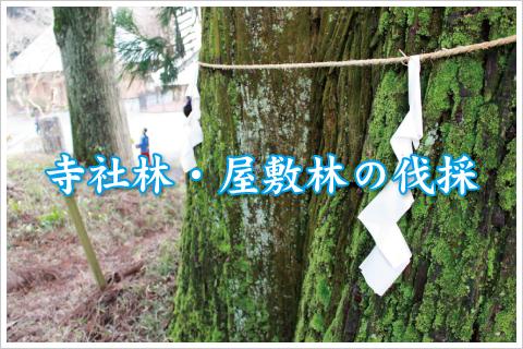 ウッドタワー工法による寺社林・屋敷林の特殊伐採事例ページへ