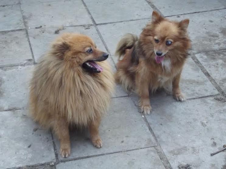 Kara und Kaya