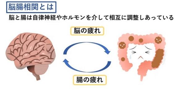 脳腸相関セラピー