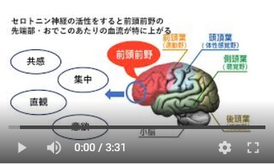 前頭前野の脳活ヘッドマッサージの画像