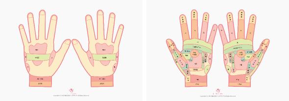 ハンドリフレクソロジー(手の反射区図)