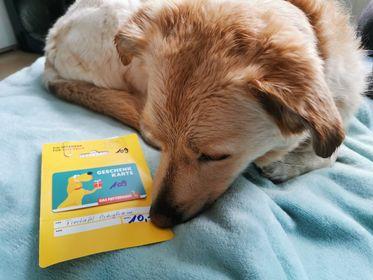Eddys Frauchen kauft ein Hundekissen für die Hundebox im Auto, damit er es unterwegs schön gemütlich hat