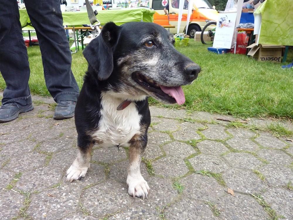 DogWalk 2014  - Bodo aus dem Tierheim - Foto Oetken