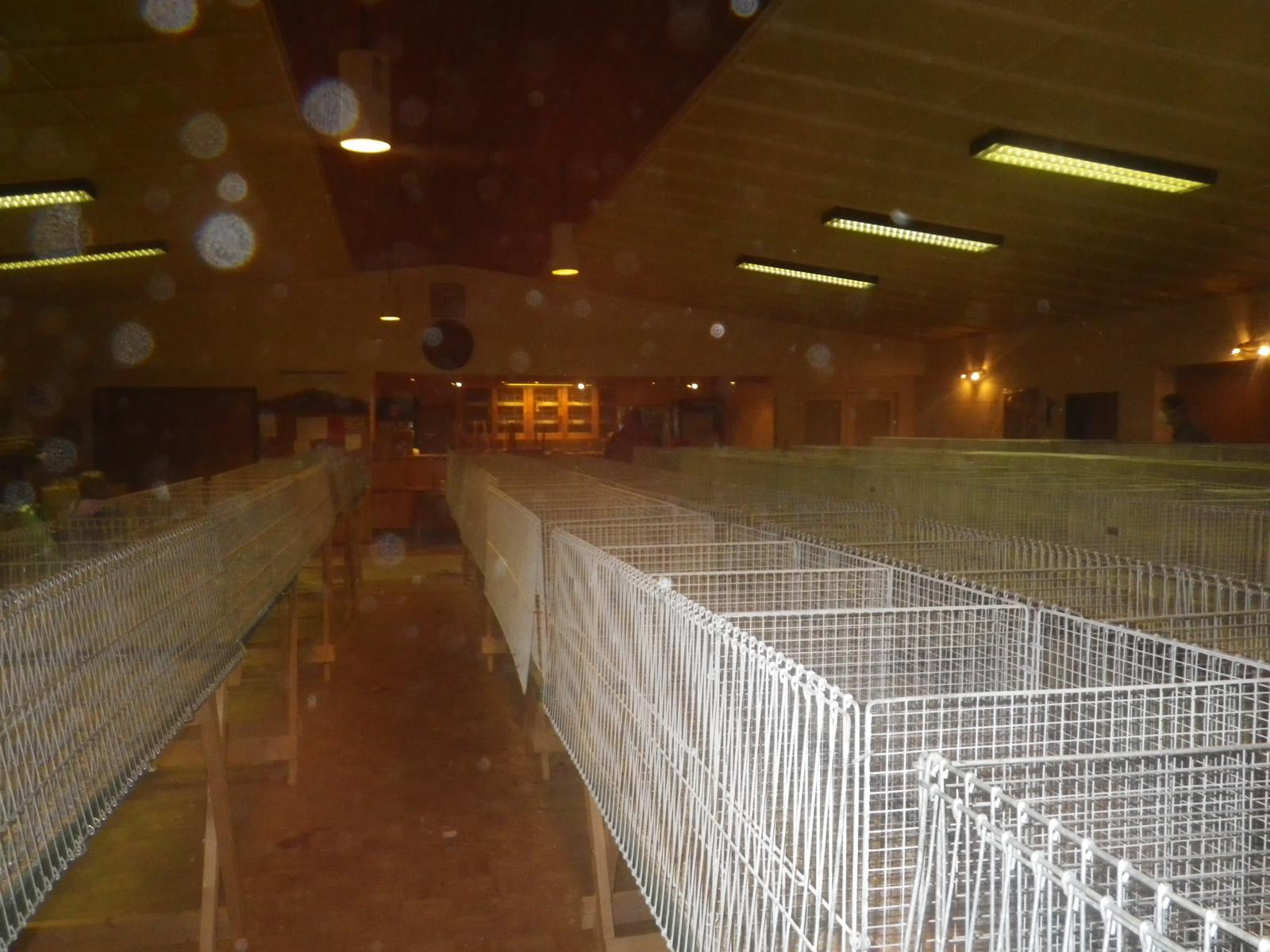 In der Halle werden derweil bereits die Käfige abgebaut...