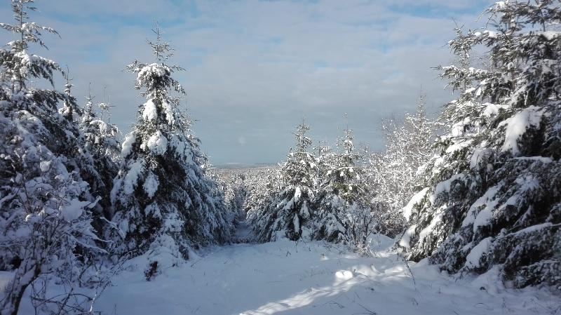 Dagmar Reichardt: Schnee - das neue Freizeitvergnügen